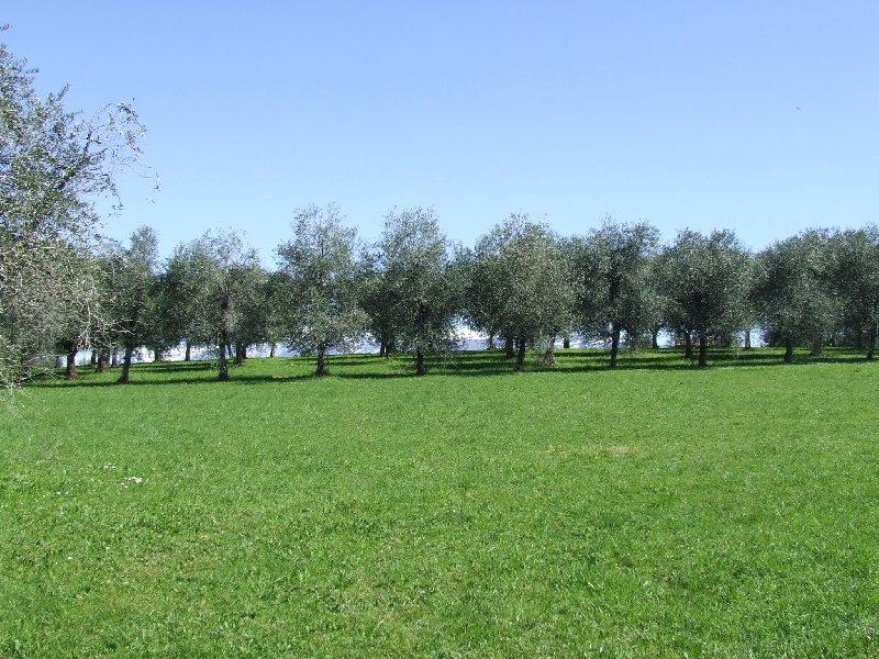 Terreno Edificabile Residenziale in vendita a San Felice del Benaco, 9999 locali, prezzo € 260.000 | CambioCasa.it