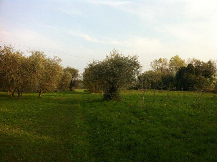 Terreno Agricolo in vendita a San Felice del Benaco, 9999 locali, zona Zona: Portese, prezzo € 45.000 | Cambio Casa.it
