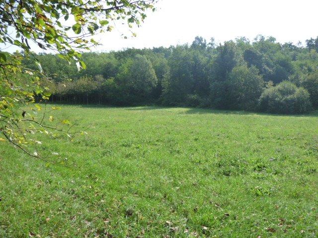 Terreno agricolo in vendita - 5800 mq